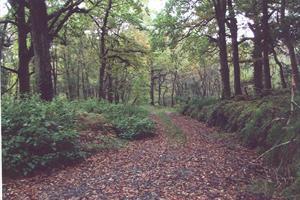 Ardnamona Woods