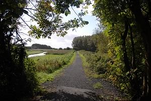 Shannon Town Trails