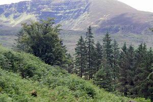 Avondale Forest Park - Centenary Trail