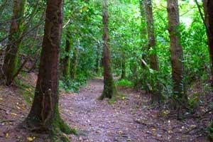 Kilbrittain Trails Castle Walk