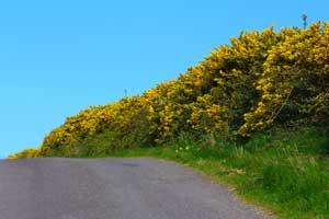 Kilbrittain Trails Estuary Walk